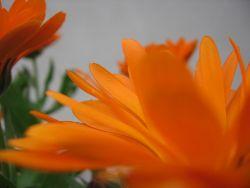 Naranja-s